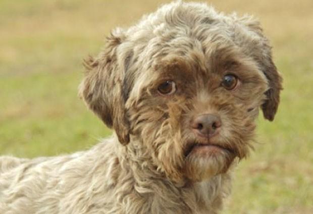 Cão fez sucesso na internet porque teria 'feições humanas' (Foto: Divulgação)