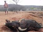 Na PB, seca faz agricultores tirarem do sustento para alimentar o gado