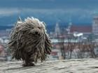 Cão sacode pelo 'volumoso' ao estilo de propaganda de xampu