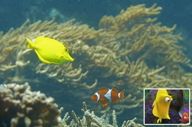 Peixe cirurgião-amarelo e peixe-palhaço foram fotografados  no aquário do zoo de Viena, e cena lembrou filme de animação 'Procurando Nemo' (Foto: Alexander Klein/AFP)