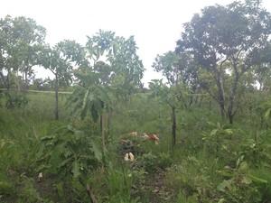 Corpos encontrados em área de mata na rodovia Norte-Sul, em Macapá (Foto: Fabiana Figueiredo/G1 Amapá)