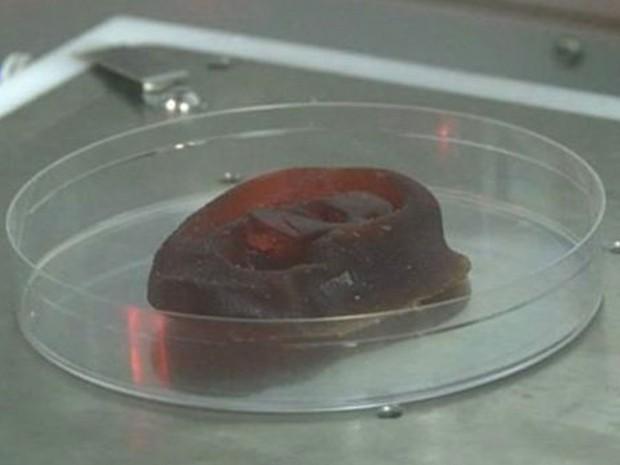 Cientistas afirmam que em três anos será possível usar a cartilagem cultivada em laboratório para reconstruir partes do corpo  (Foto: BBC)