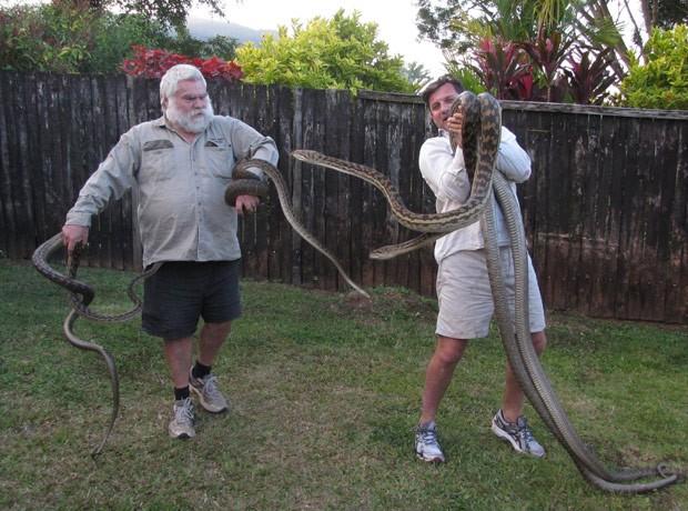 Quatro pítons foram achadas em telhado de casa em Cairns (Foto: Reprodução/Facebook/Cairns Snake Removals)