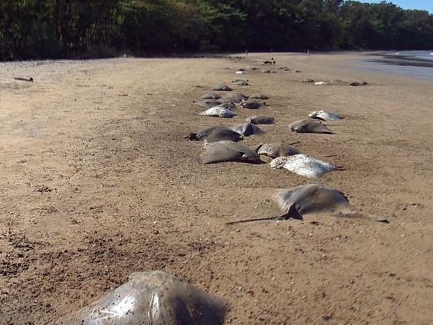 Animais mortos foram encontrados na areia da Praia de Camburi, em Vitória (Foto: Reprodução/ TV Gazeta)