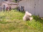 Esquadrão AntiBombas da PM retira artefato de muro de presídio no Recife