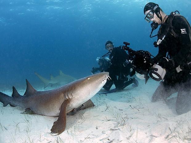 Visitantes poderão ver tubarões Lambaru (Foto: Dviulgação/ Daniel Botelho)