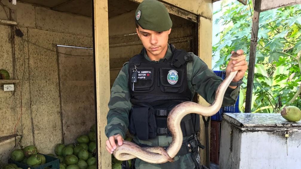 Cobra jiboia arco-íris foi resgatada pela Polícia Militar Ambiental e vai ser devolvida à natureza (Foto: Walter Paparazzo/G1)