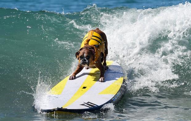 Cachorro participa de campeonato de surfe na Califórnia (Foto: Frederic J. Brown/AFP)