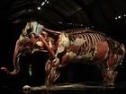 Exposição mostra anatomia de animais dissecados