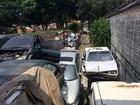 Depósito de carros da Prefeitura de SP tem focos de reprodução de mosquito