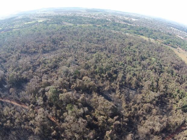Imagens aéreas mostram área devastada na Mata de Santa Tereza, em Ribeirão Preto (Foto: GF Drone)