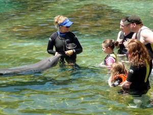 Visitantes nadam com golfinhos no parque Discovery Cove, em Orlando (Foto: Flávia Mantovani/G1)