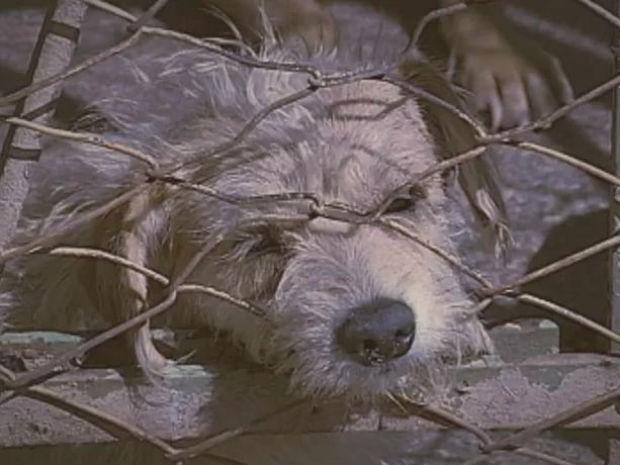 Adoção de animais é uma atitude que conquista corações (Foto: Reprodução/TV TEM)