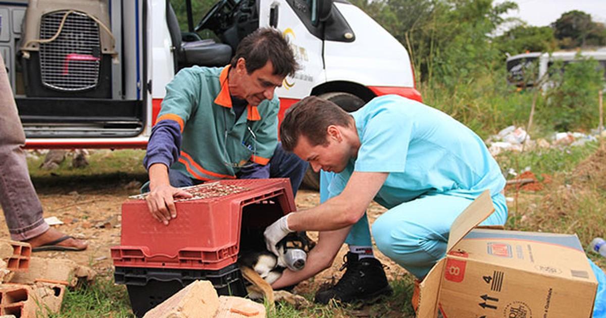 Campinas cria Samu Animal, serviço pioneiro no País