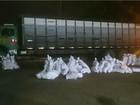 PF apreende 1,4 t de maconha em caminhão boiadeiro em Caarapó, MS