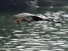 Fotógrafo flagra cegonha capturando peixe em zoo na Índia