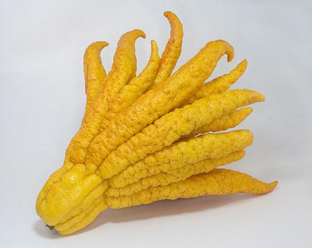 A 'mão de Buda' (Foto: Wikimedia Commons)