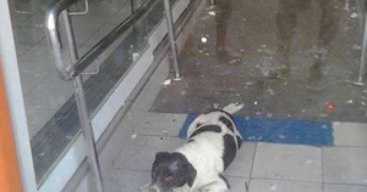 Moradores resgatam cão que passou três dias preso em banco no RJ - Globo.com