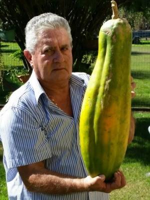 Sitiante se orgulha ao mostrar fruto gigante. (Foto: Roberto Aparecido Capeletto/ Arquivo pessoal)