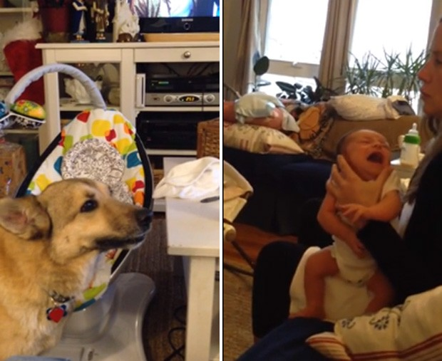 Cadela parece 'conversar' com bebê ao ver criança chorar no colo da mãe (Foto: Reprodução/YouTube/EastCoastWaterman)