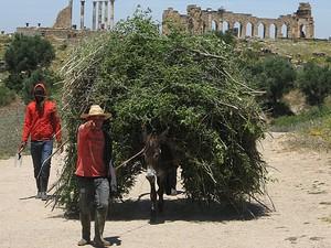 Burro de carga em Volubilis (Foto: Giovanna Dell'Orto/AP)