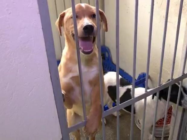 Cachorros podem ser adotados por aplicativo de celular em Esteio, RS (Foto: Reprodução/RBS TV)
