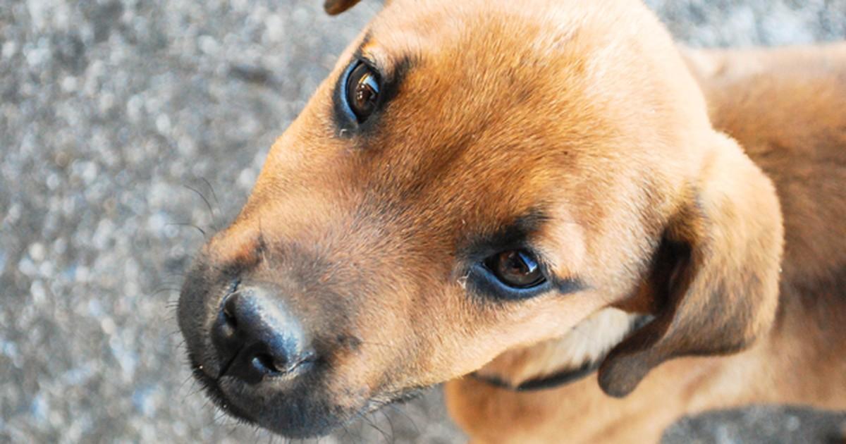 São João del Rei tem mutirão de castração para cães e gatos - Globo.com