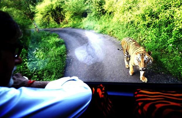 Ator indiano Amitabh Bachchan fez sucesso ao ser seguido por tigre por 4 km (Foto: Reprodução/Facebook/Amitabh Bachchan)
