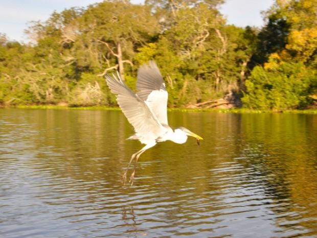Pantanal de MT é habitat de centenas de espécies de aves (Foto: Carolina Holland/G1)