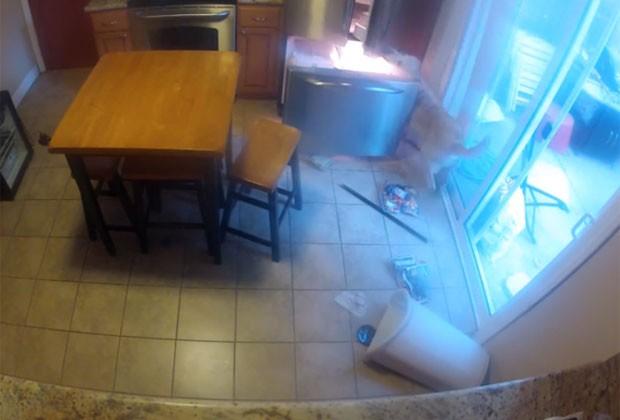 Cadela usa as patas para abrir o refrigerador e pegar a comida (Foto: Reprodução/YouTube/Adam Montiel)