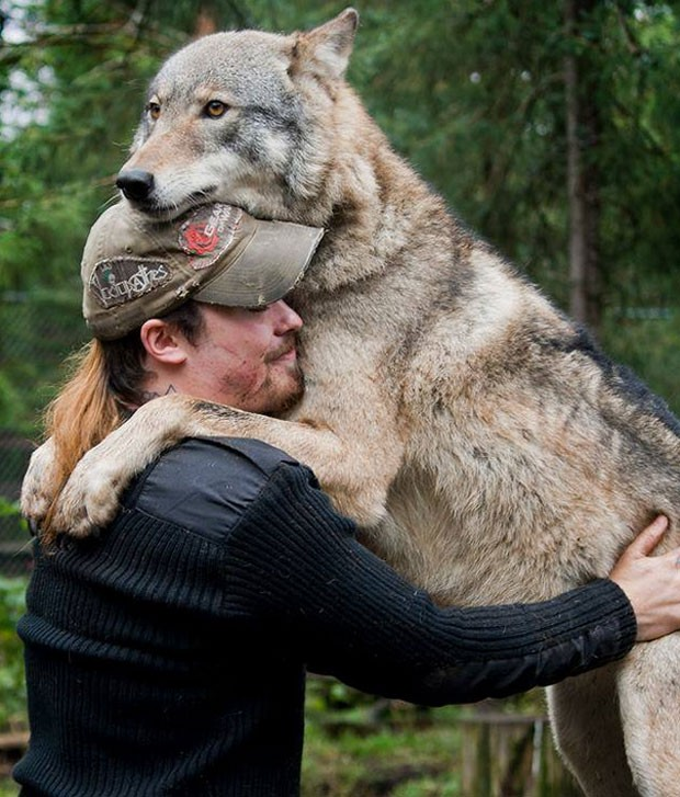 Foto mostra abraço carinhoso entre agente florestal e lobo (Foto: Reprodução/Imgur/lun471k)