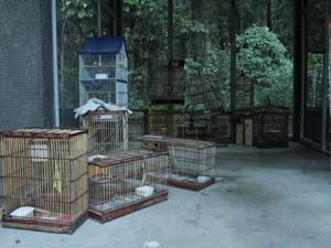 Jaulas e armadilhas apreendidas são visadas por assaltantes. (Foto: Natália Souza/G1)