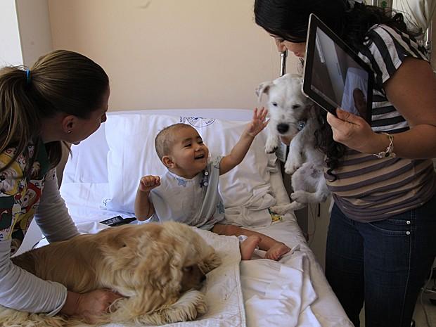 Câncer cães 2 (Foto: Dolores Ochoa/AP)