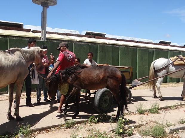 Muitos animais chegaram debilitados e feridos (Foto: Michelle Farias/G1)