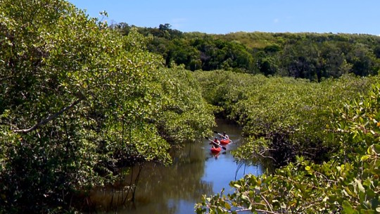 Primeiro rio a receber nome no Brasil é um curso d'água preservado desde o descobrimento