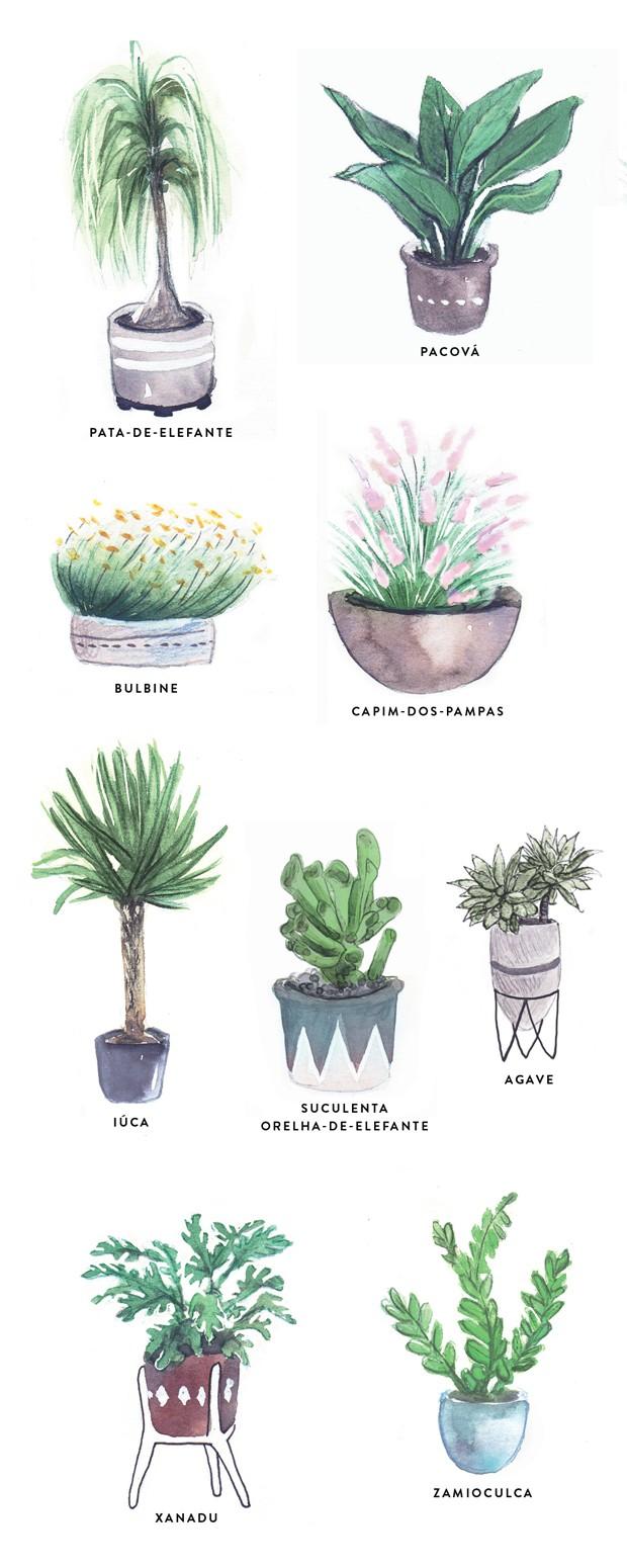 Plantas resistentes ao vento (Foto: Ilustração Mary Cagnin)