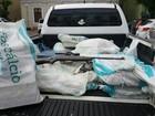 Polícia Civil apreende 275 quilos de maconha na maior ação deste ano