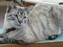 Vereadores 'despejam' gato mascote de biblioteca em cidade dos EUA