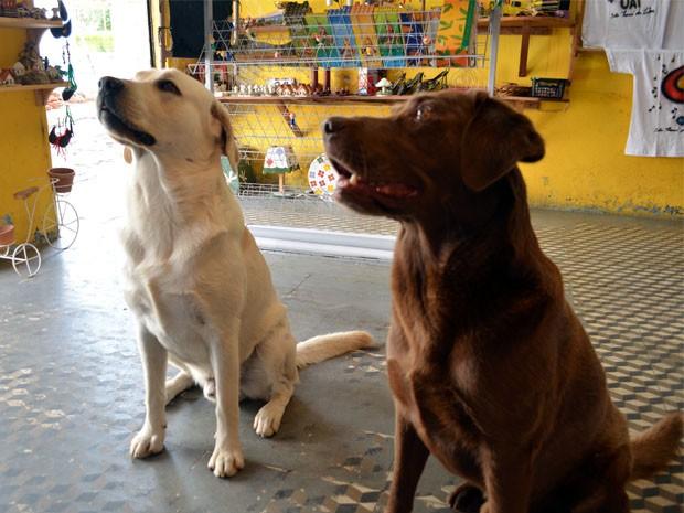 Os cães ficam atentos aos comandos do treinador (Foto: Tiago Campos / G1)
