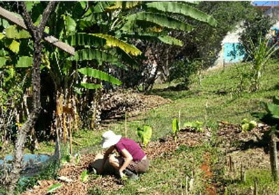fazenda_sustentavel_agricultura (Foto: Karin Salomão/Ed. Globo)