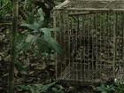 Em Belterra, 351 animais silvestres são reintroduzidos à natureza