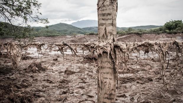 Vale e BHP propõem acordo para revitalizar Rio Doce