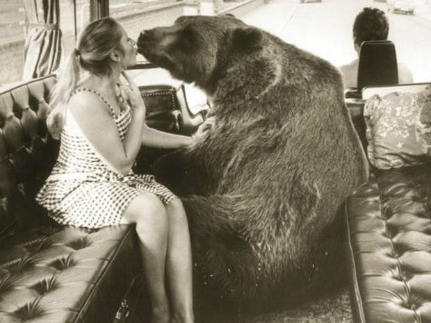 Maggie diz que pressentiu que o fim da vida de Hércules estava próximo (Foto: BBC/Hercules the Bear A Gentle Giant in the Family I Maggie Robin)