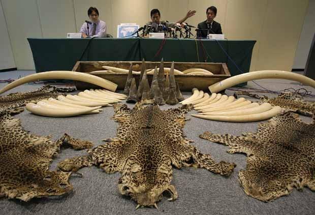 Hong Kong apreende grande carregamento de marfim, chifres de rinoceronte e pele de leopardo. (Foto: AP Photo/Vincent Yu)