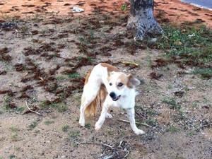 Cachorro foi apelidado de Lost (Foto: Arquivo pessoal)