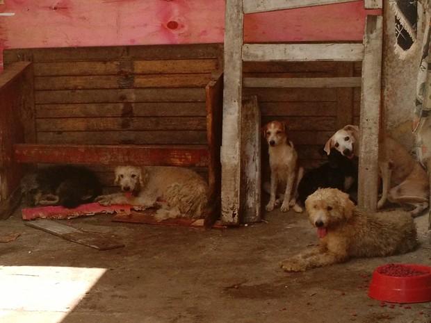 Animais receberão tratamento e devem ser adotados. (Foto: Penélope Araújo/G1)