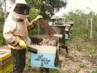Apicultores de Vilhena, RO, esperam colher 80 toneladas de mel