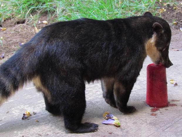 Picolé é servido aos mamíferos em zoo de João Pessoa  (Foto: Divulgação/Secom-JP)