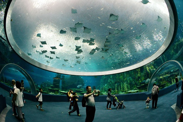 Visitantes no aquário do Chimelong Ocean Kingdom, considerado o maior do mundo (Foto: Mark Ralston/AFP)