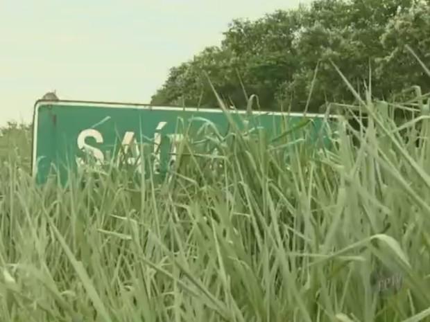 Placa é escondida pelo mato alto (Foto: Reprodução/ EPTV)